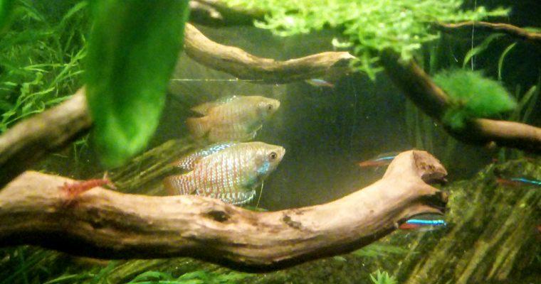 Akwarium – Krajobraz zamknięty w szkle.