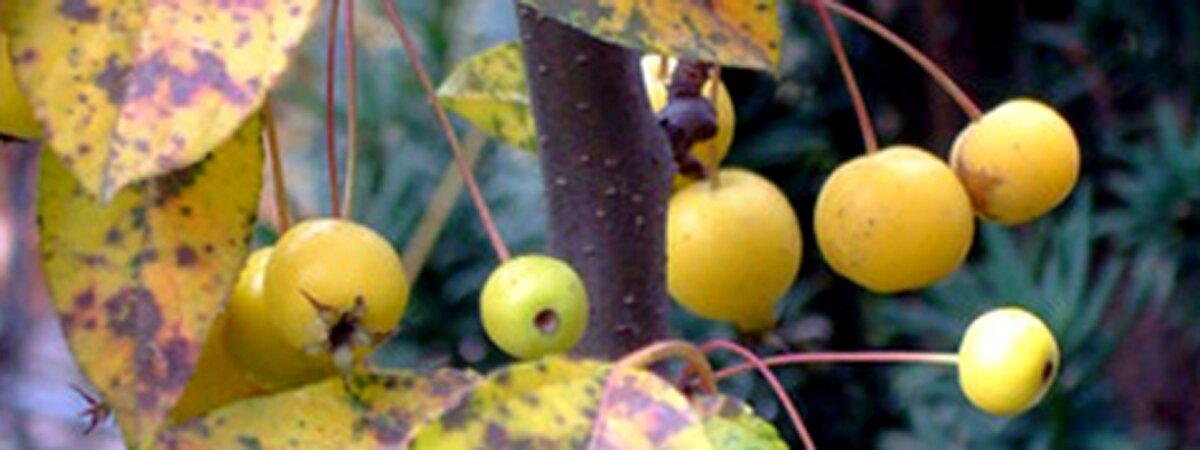 Rośliny piękne jesienią – moi faworyci cz.I