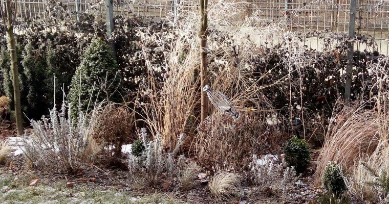 Rośliny piękne zimą – moi faworyci cz.I