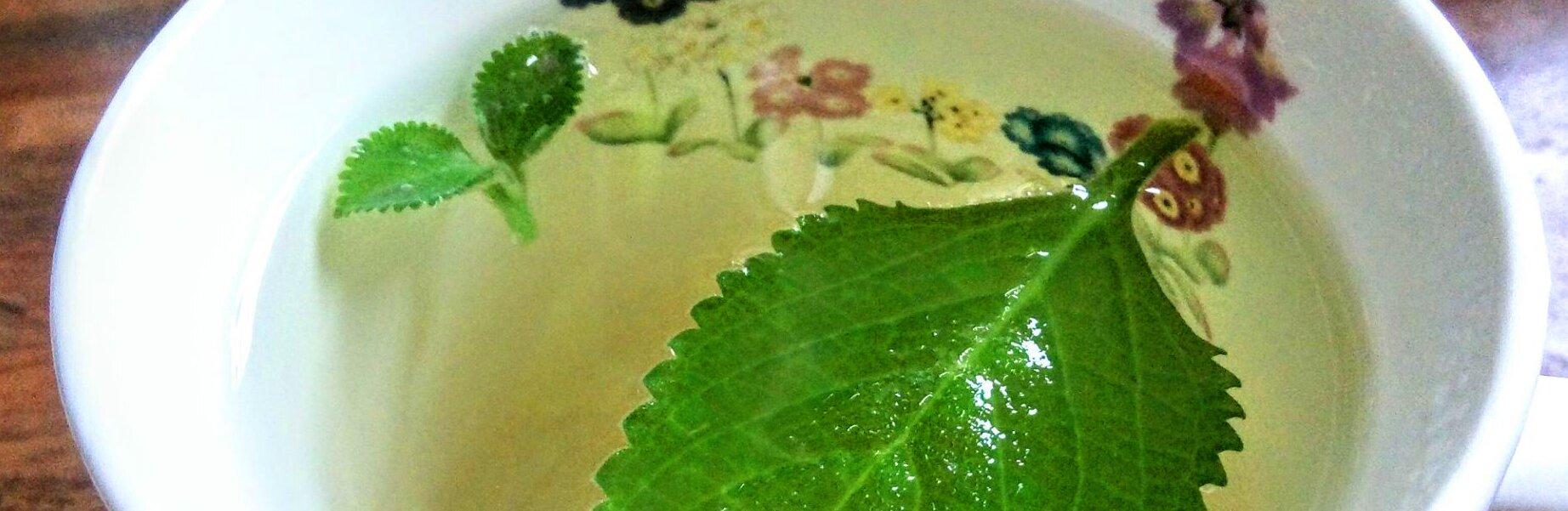 Zioła w domu. Rośliny doniczkowe, które możesz zjeść!