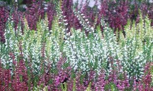 Jesienny ogród pionowy za grosik